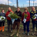 Hop Shoot Picking with the Tongham TEA Club
